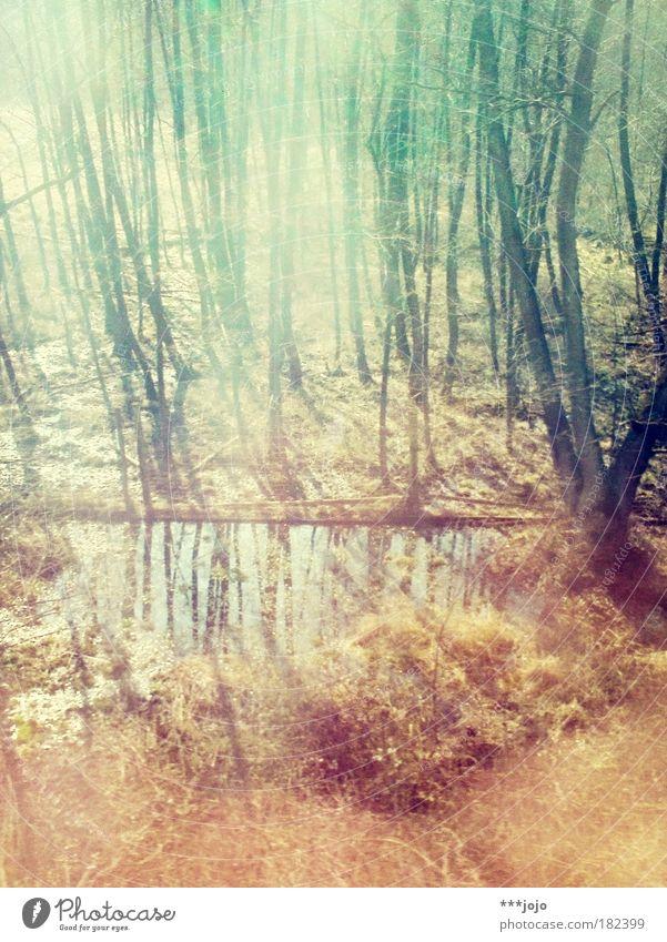 movimentography. Natur Wasser Baum Pflanze Wald Herbst träumen Landschaft Umwelt leuchten Schönes Wetter Farbenspiel Drogenrausch Laubwald