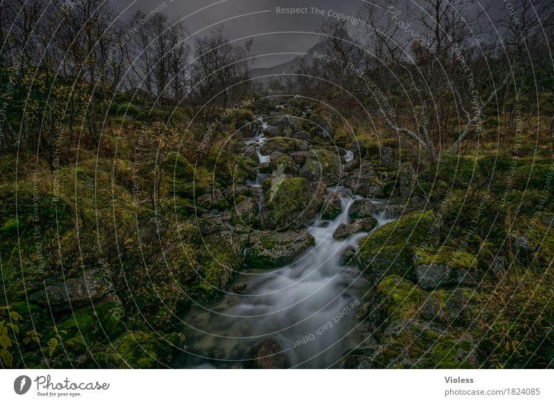 Mystery Natur Pflanze grün Wasser Landschaft dunkel Berge u. Gebirge Herbst natürlich Stein Felsen nass Fluss Urelemente entdecken Flüssigkeit