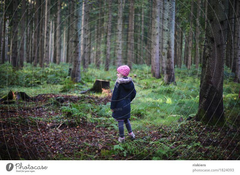Waldkind Mensch feminin Kind Mädchen Kindheit 1 3-8 Jahre Umwelt Natur Herbst beobachten entdecken Erholung Blick träumen wandern blond frisch kalt natürlich