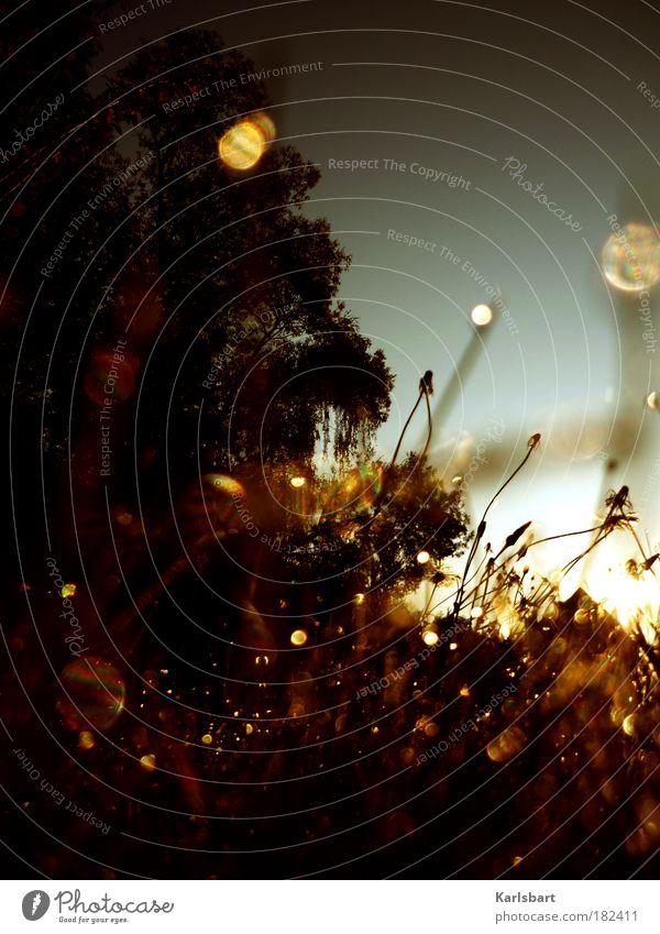morgenstund. und gold. Natur Baum Farbe Leben Erholung Herbst Wiese Gras Freiheit Glück Eis Zufriedenheit Feld Gold Design Umwelt