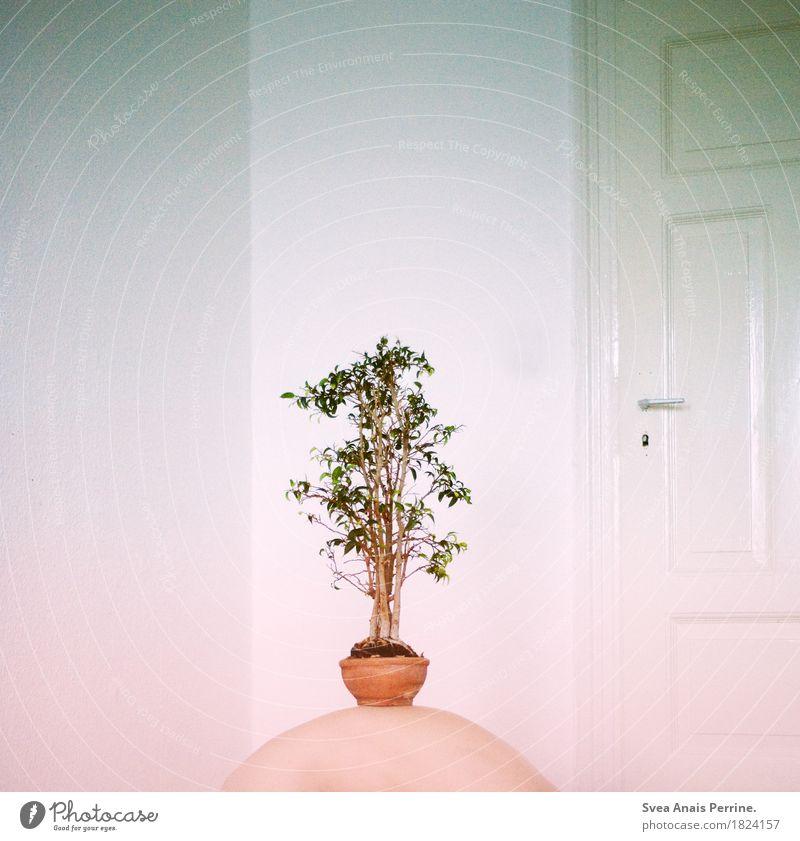 Vater Erde. Junger Mann Jugendliche Körper Haut Rücken 1 Mensch 18-30 Jahre Erwachsene Tür Blumentopf Pflanze Zimmerpflanze Blühend außergewöhnlich dünn kalt