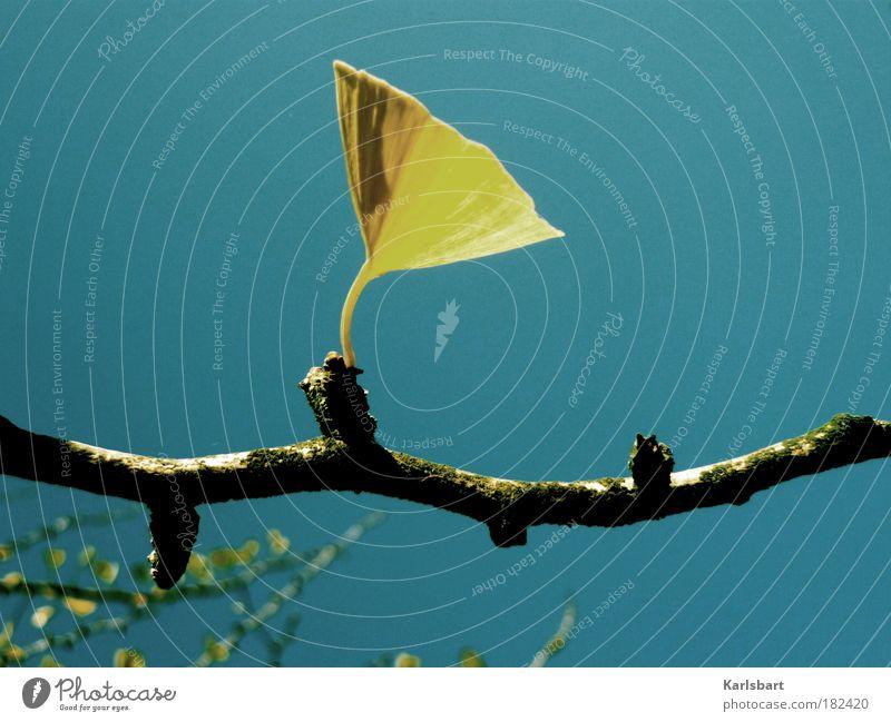 ginkgo. grammophon. Natur schön Himmel Baum Pflanze ruhig Blatt Leben Erholung Herbst Ast Morgen Schönes Wetter harmonisch Wohlgefühl Detailaufnahme