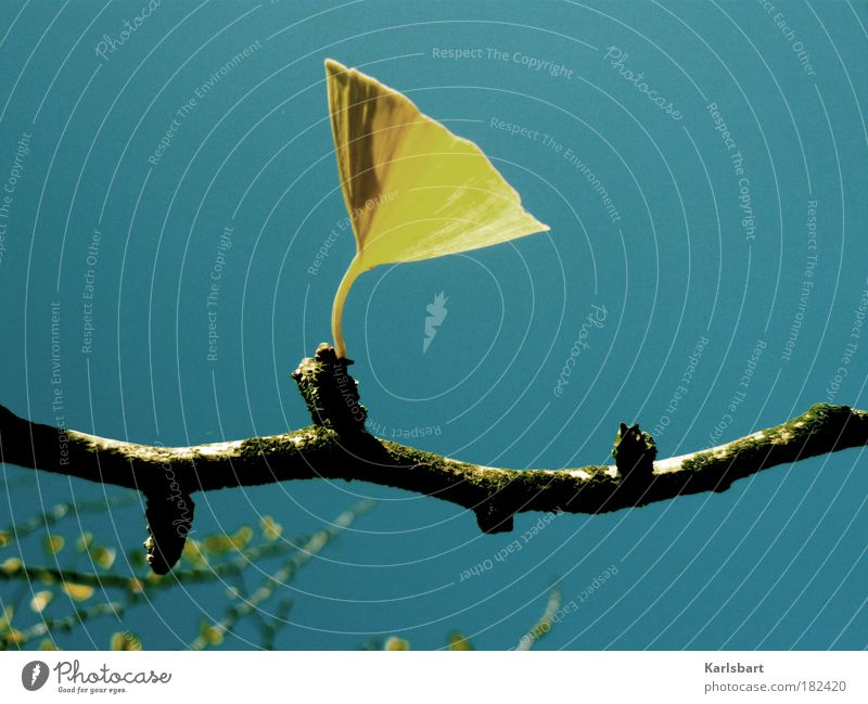 ginkgo. grammophon. schön Leben harmonisch Wohlgefühl Erholung ruhig Natur Himmel Wolkenloser Himmel Herbst Schönes Wetter Pflanze Baum Blatt Ginkgo Kelchblatt