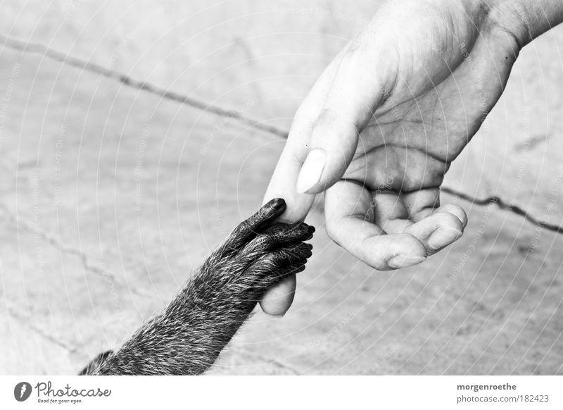 freundschaft Schwarzweißfoto Außenaufnahme Detailaufnahme Kontrast Schwache Tiefenschärfe Mensch maskulin Hand Finger 1 Tier Pfote füttern Kommunizieren