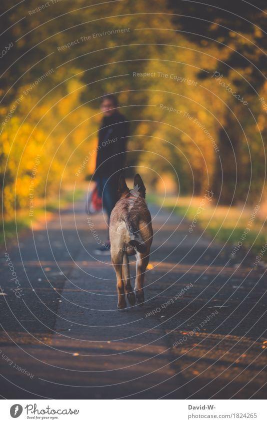 gassi gehen Mensch Frau Hund Natur Jugendliche Junge Frau Landschaft Erholung Tier Erwachsene Umwelt Leben Herbst feminin Freizeit & Hobby