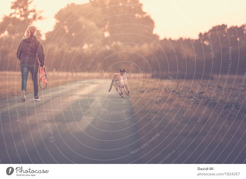 um die Wette laufen Mensch Frau Hund Natur Jugendliche schön Junge Frau Sonne Tier Freude Erwachsene Umwelt Leben Wiese Herbst Sport