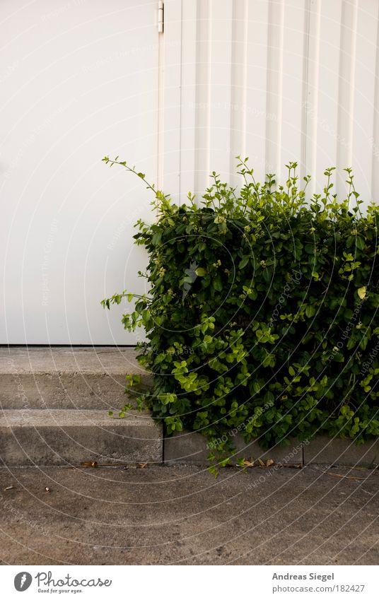 Stufen Farbfoto Gedeckte Farben Außenaufnahme Detailaufnahme Menschenleer Textfreiraum oben Tag Kontrast Umwelt Natur Pflanze Sträucher Hecke Haus Bauwerk