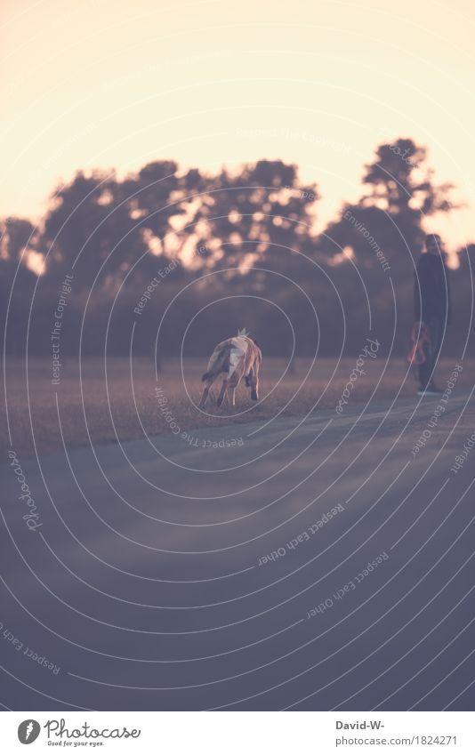 jetzt aber schnell Mensch Frau Hund Natur Jugendliche Junge Frau Landschaft Tier Wald Erwachsene Umwelt Leben Herbst Gesundheit Freiheit Feld