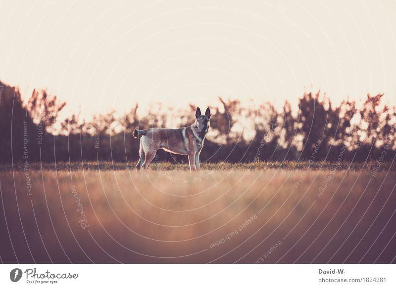 aufmerksam Hund Natur Sommer schön Sonne Landschaft Erholung Tier ruhig Ferne Umwelt Wiese Herbst Freizeit & Hobby Zufriedenheit wandern