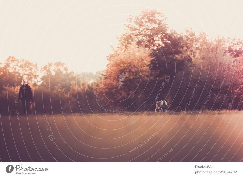 auslauf Mensch Frau Hund Natur Jugendliche Junge Frau Sonne Landschaft Tier Erwachsene Umwelt Leben sprechen Liebe Wiese Herbst