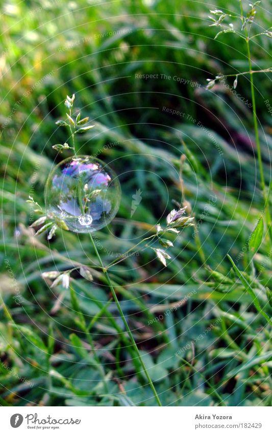 Kurzweilige Blüte Farbfoto Außenaufnahme Nahaufnahme Menschenleer Textfreiraum rechts Hintergrund neutral Tag Reflexion & Spiegelung Freizeit & Hobby Natur Gras