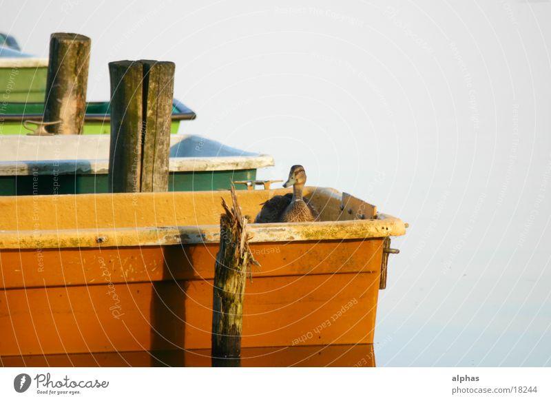 Boote 2 Wasserfahrzeug See Teich Steg Sommer Ente