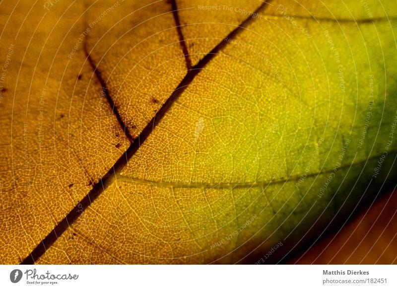 500 Blatt Herbst Makroaufnahme Strukturen & Formen Ordnung Regenbogen mehrfarbig Körperzelle Nahaufnahme Farbverlauf diagonal Muster Lunge Photosynthese