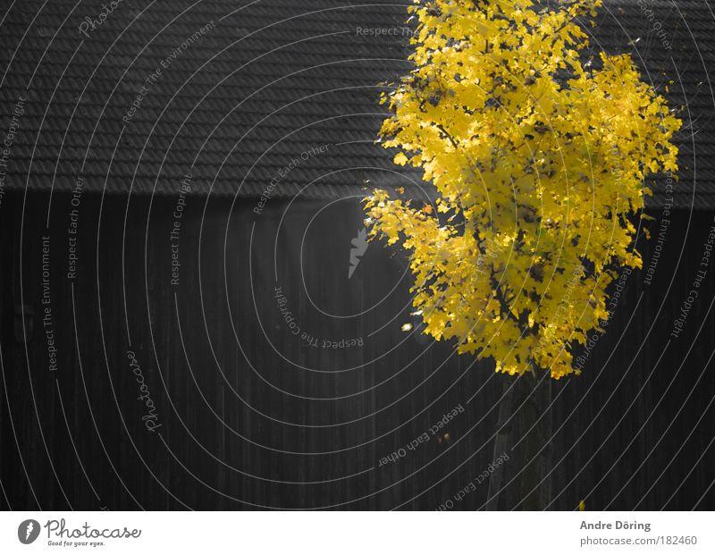 Der brennende Busch Baum Blatt gelb Herbst Tod Wärme braun Schönes Wetter Trennung Winterschlaf