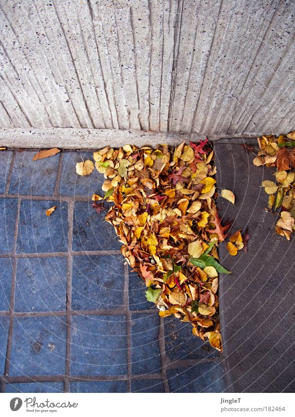 Herbstpflaster [Koeln 2.0] Blatt Wand Umwelt Mauer Wind Treppe Wandel & Veränderung Unendlichkeit geheimnisvoll Idee Altstadt bevölkert Vogelperspektive