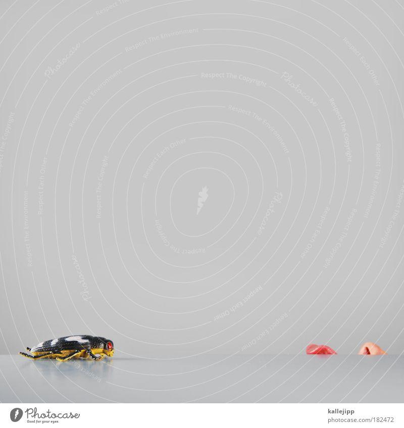 zwei, Mensch Lebensmittel Nase Ernährung planen Insekt Appetit & Hunger fangen Jagd Restaurant Fleisch Käfer Ekel Plan zielen lutschen