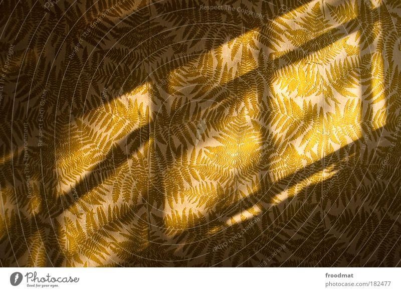 lichtschattengewächs alt grün Wand Fenster Mauer Wärme Tapete Umwelt Papier ästhetisch retro trist Wandel & Veränderung Klima Kitsch Kultur