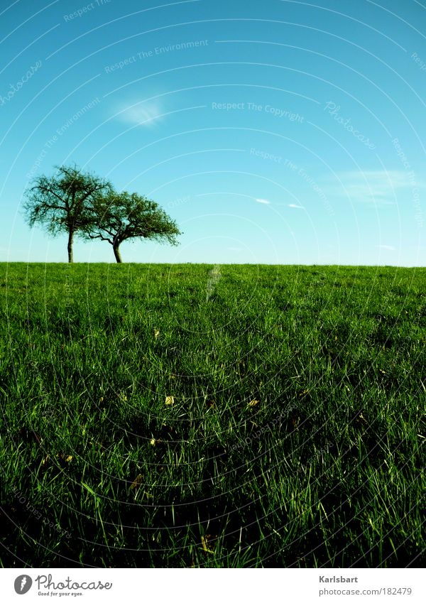 odyssee. Natur Himmel Baum Sommer ruhig Leben Erholung Herbst Wiese Gras Frühling Freiheit Wege & Pfade Zufriedenheit Feld Gesundheit