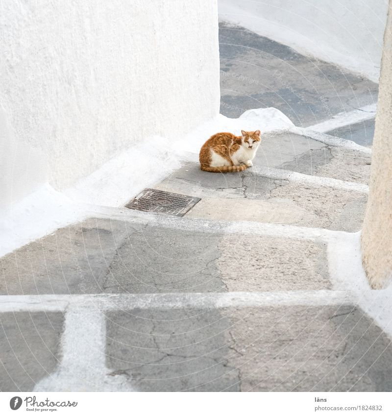 komm doch Katze Erholung Tier ruhig Wand Wege & Pfade Gebäude Mauer Treppe Zufriedenheit beobachten Pause Gelassenheit Altstadt Haustier selbstbewußt