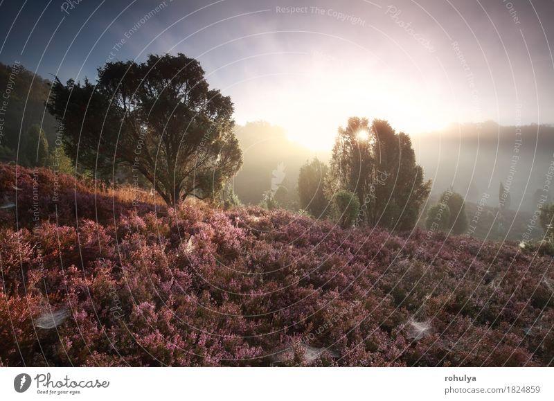 nebligen Sonnenaufgang über Hügeln mit blühenden Heidekraut Himmel Natur Sommer Baum Blume Landschaft Berge u. Gebirge Blüte Herbst Deutschland rosa Nebel