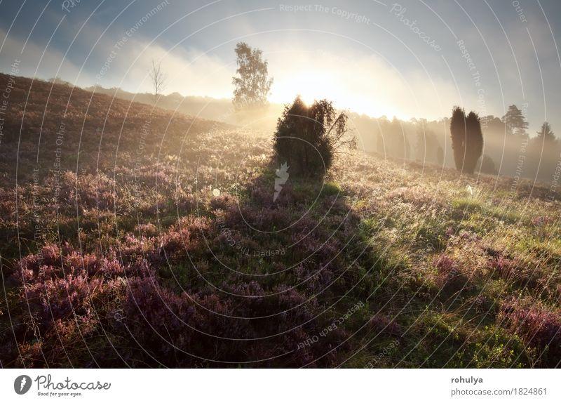 Wacholderbaumschatten auf Heide bei Sonnenaufgang Himmel Natur Sommer Baum Blume Landschaft Berge u. Gebirge Blüte Herbst Deutschland rosa Nebel Aussicht Hügel