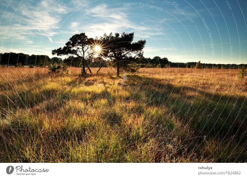 Sonnenstrahlen hinter Kiefern auf Sumpf Himmel Natur blau Baum Landschaft Wiese Gras Deutschland wild Aussicht