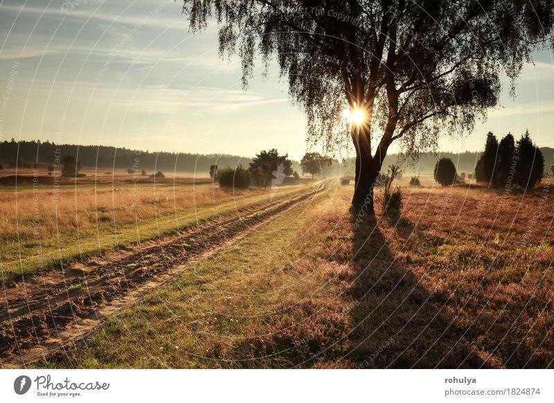 Boden Straße und Birke im nebligen Morgen Sonnenlicht Natur Ferien & Urlaub & Reisen Sommer Baum Landschaft Wege & Pfade Wiese Herbst Deutschland Nebel wandern