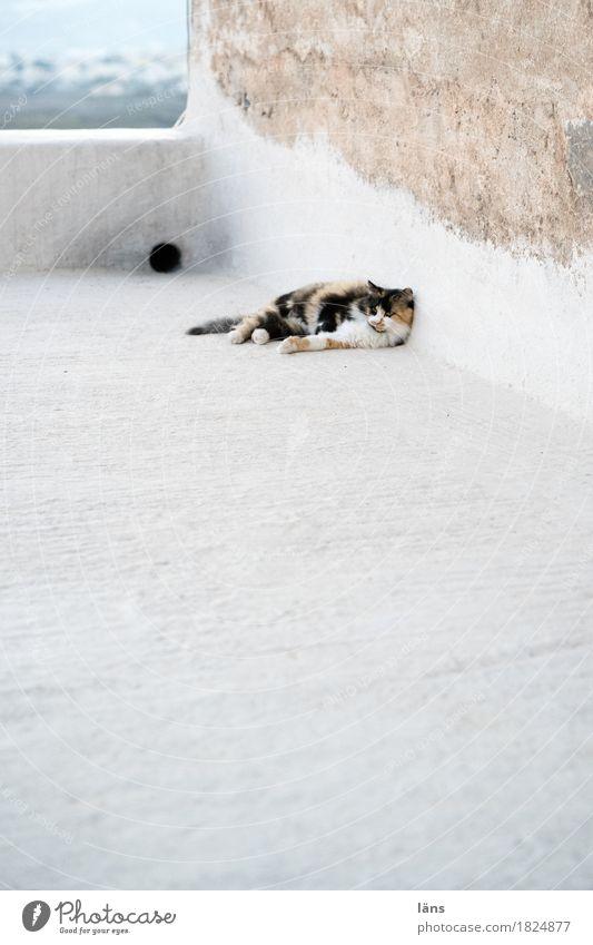 siesta Mauer Wand Fassade Tier Haustier Katze 1 beobachten liegen Zufriedenheit Coolness Wachsamkeit Vorsicht Gelassenheit geduldig Langeweile Trägheit bequem