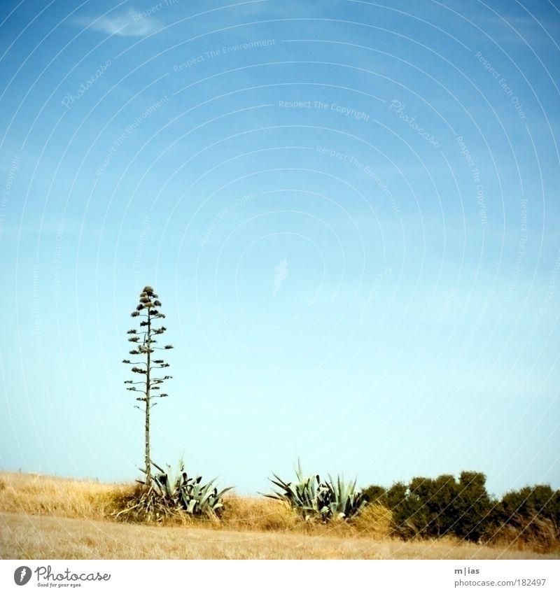 Blütenpracht Natur Pflanze Einsamkeit ruhig Ferne Wege & Pfade Feld Wachstum Tourismus Ausflug Warmherzigkeit Idylle Vergänglichkeit Sehnsucht Gelassenheit Mut