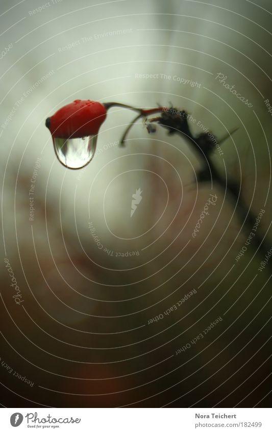 Tränen der Natur Natur Wasser rot Pflanze Umwelt Landschaft Herbst Traurigkeit träumen Park Regen Angst verrückt ästhetisch Zukunft Wunsch