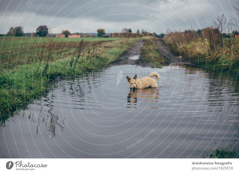 Tierischer Badespaß. Natur Landschaft Wasser Wolken Gewitterwolken Herbst Wiese Feld Haustier Hund Schwimmen & Baden entdecken stehen kalt nass natürlich