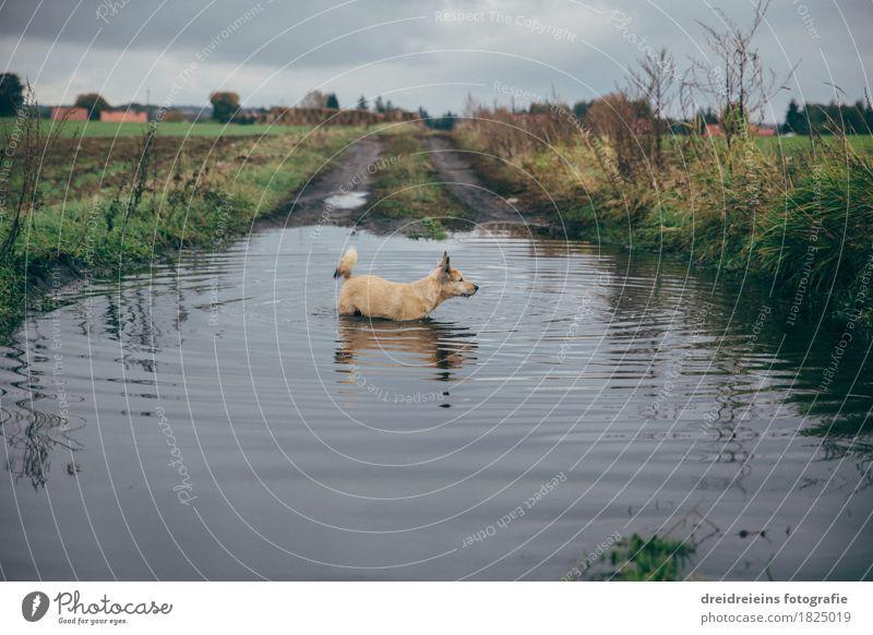 Tierischer Badespaß. Natur Landschaft Wasser Wolken Gewitterwolken Herbst Wiese Feld Haustier Hund Schwimmen & Baden beobachten entdecken stehen kalt nass