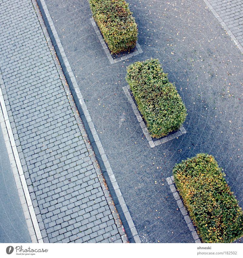 Straßenbaukunst Teil 2 grün Blatt Wege & Pfade grau Ordnung Verkehr Bürgersteig Verkehrswege Autofahren Straßenverkehr Fußgänger Personenverkehr Hecke