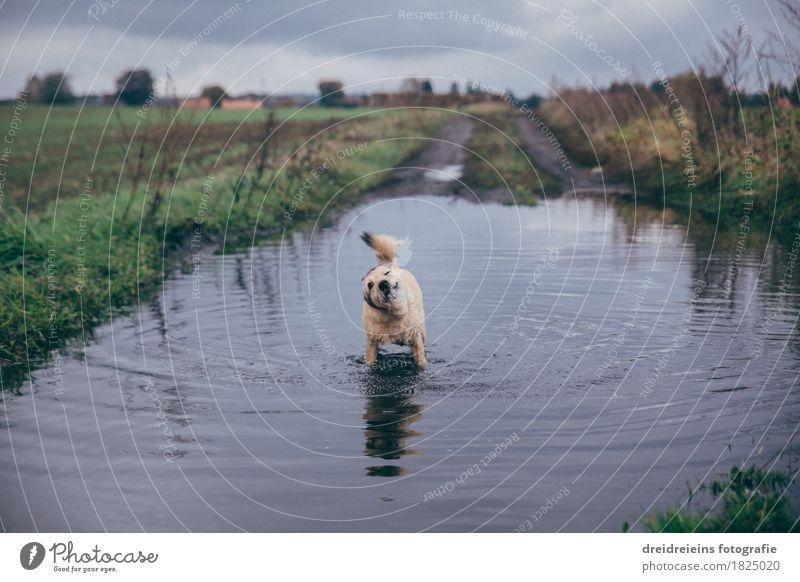 Tierischer Badespaß. Natur Landschaft Wasser Wolken Gewitterwolken Herbst Wiese Feld Haustier Hund Schwimmen & Baden stehen kalt nass natürlich niedlich Freude