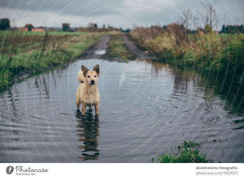 Tierischer Badespaß. Natur Landschaft Wasser Wolken Gewitterwolken Herbst Wiese Feld Haustier Hund Schwimmen & Baden beobachten stehen kalt nass natürlich
