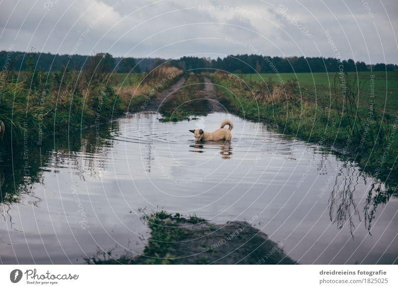 Tierischer Badespaß. Natur Landschaft Wasser Wolken Gewitterwolken Herbst Wiese Feld Haustier Hund Schwimmen & Baden entdecken stehen tauchen kalt nass
