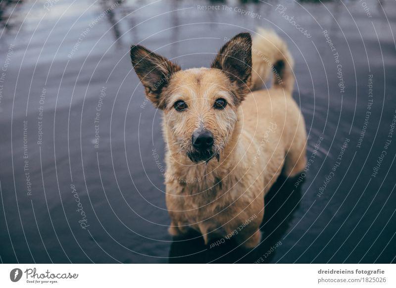 Hundblick. Wasser Tier Haustier beobachten Blick stehen warten Freundlichkeit kalt natürlich Neugier niedlich Tatkraft loyal Sympathie Freundschaft Tierliebe