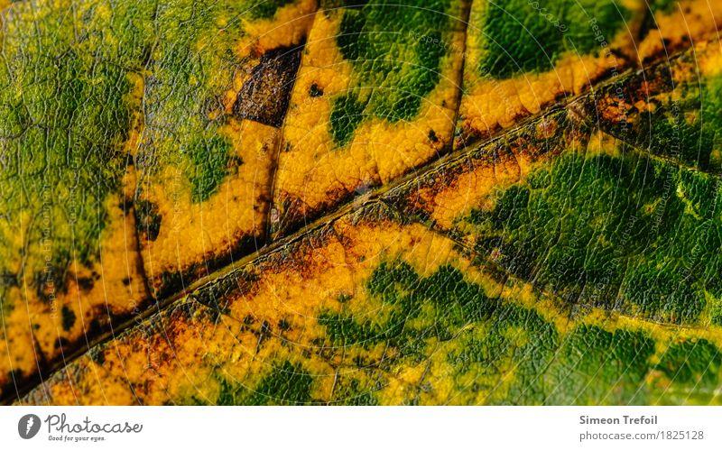 abstraktes Laub Natur Pflanze Herbst Baum Blatt Wald braun mehrfarbig gelb grün rot Leben Zeit Blattadern Herbstlaub herbstlich Strukturen & Formen