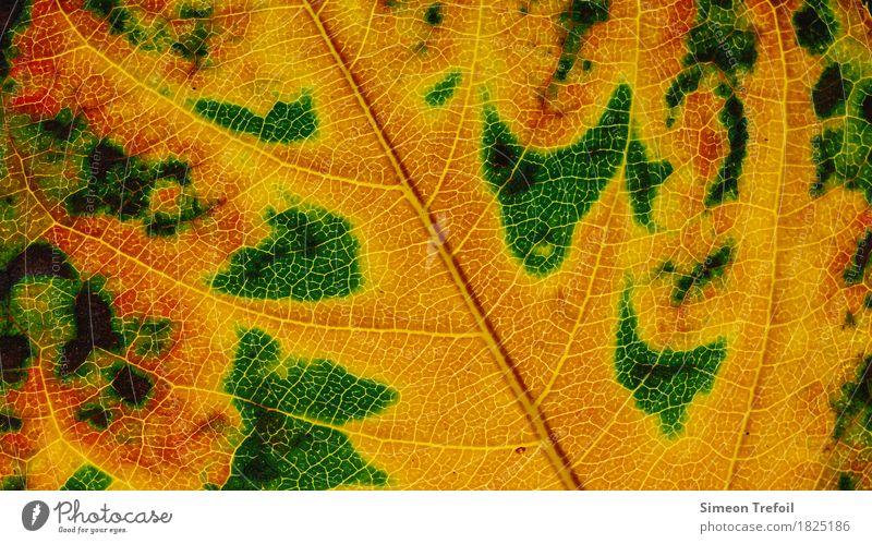 abstrakte Landschaften Natur Pflanze Herbst Baum Blatt Garten braun gelb grün rosa Blattadern Herbstlaub herbstlich Nahaufnahme Farbfoto Detailaufnahme