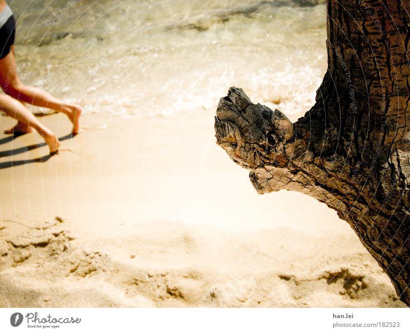 Strandlauf Mensch alt Ferien & Urlaub & Reisen Baum Sommer Freude Strand Leben Bewegung Sand Beine Paar Fuß Kraft Freizeit & Hobby Tourismus