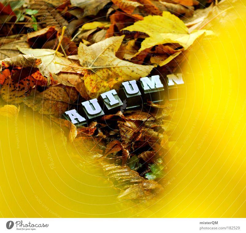Take a Closer Look. Natur Pflanze Blatt Landschaft Herbst Kunst Zeit Wetter außergewöhnlich Design Schriftzeichen ästhetisch Boden Spaziergang Suche einzigartig