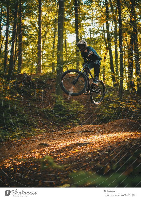 jump Mensch Jugendliche Pflanze Baum Freude Wald 18-30 Jahre Erwachsene Umwelt Herbst Lifestyle Sport fliegen springen maskulin Freizeit & Hobby