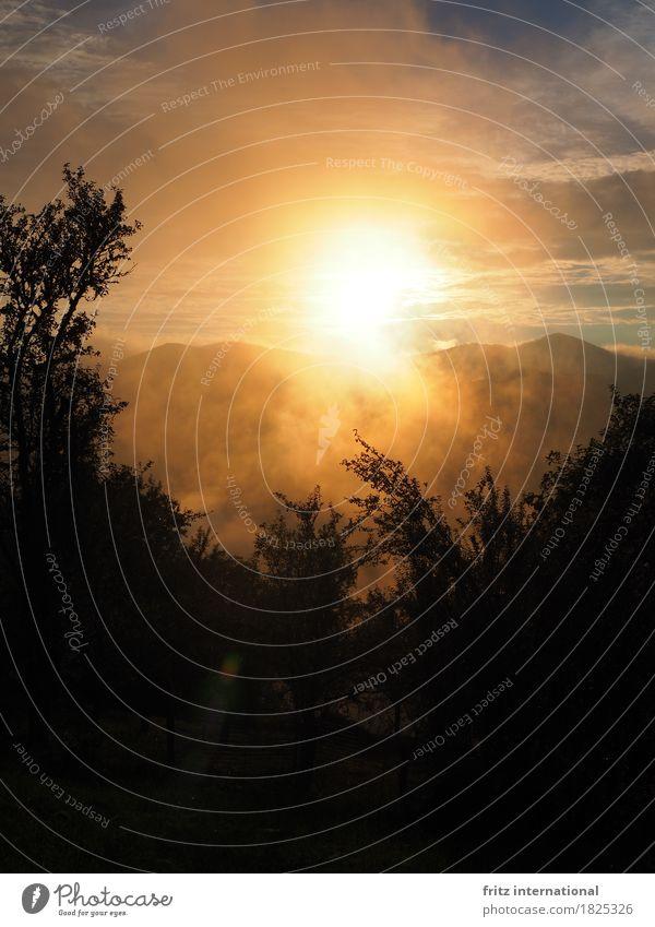 Morgennebel Umwelt Landschaft Wolken Sonnenaufgang Sonnenuntergang Schönes Wetter Nebel Baum Sträucher Hügel Gipfel Bulzeștii de Sus Rumänien Europa
