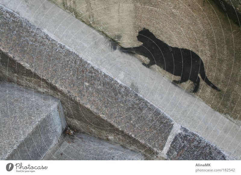 Catwalk Kunst Mauer Wand Treppe Katze Stein Graffiti Stadt grau schwarz Straßenkunst Schablone schleichen freilebend Herumtreiben Straßenkatze Farbfoto