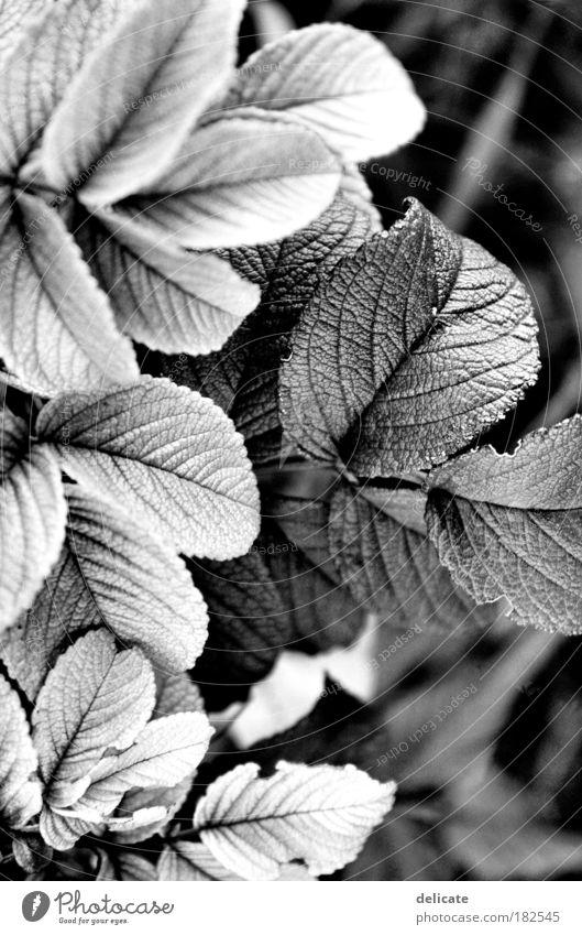Light/Dark Natur Pflanze Wachstum beobachten Vergänglichkeit dehydrieren