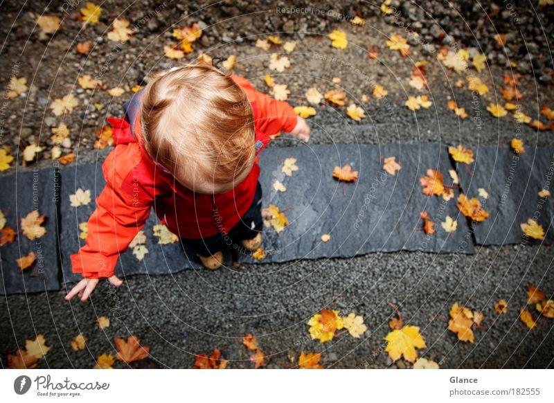 kleiner Mann im Herbst Mensch rot Blatt Kind gelb Farbe kalt Spielen oben grau Stein maskulin Licht stehen Jacke