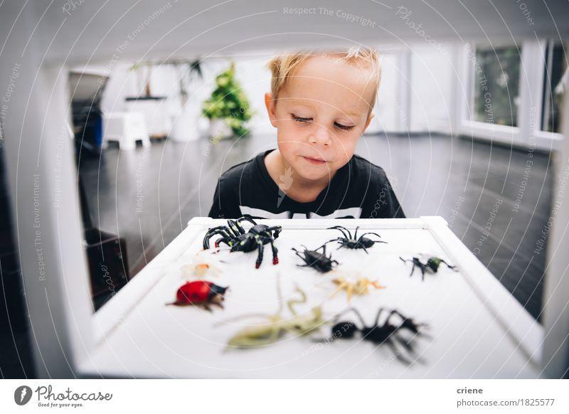 Kaukasischer kleiner Junge, der zu Hause mit Spinne spielt, spielt Lifestyle Freude Spielen Kinderspiel Raum Wohnzimmer Kinderzimmer Bildung Wissenschaften