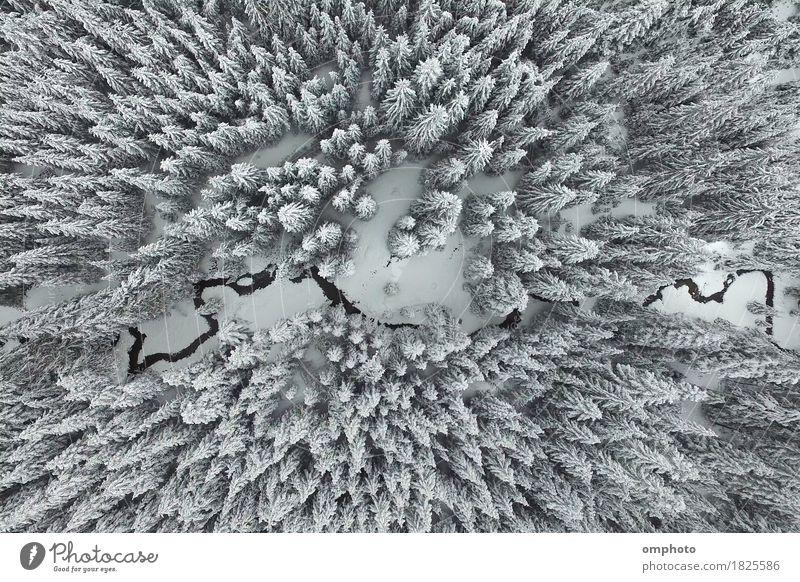 Luftaufnahme von verschneiten Kiefern und einem kleinen mäandrierenden Bach schön Schnee Berge u. Gebirge Umwelt Natur Landschaft Baum Park Wald Fluss