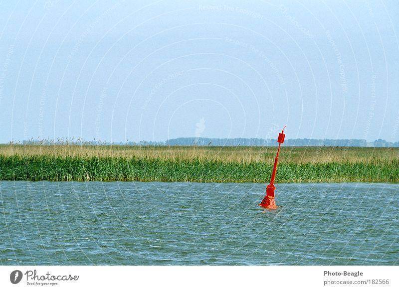 Dorit gewidmet Wasser Ferne See Wellen Horizont natürlich Schilfrohr Ostsee Darß Mecklenburg-Vorpommern ursprünglich Zingst Boje Fischland unbebaut