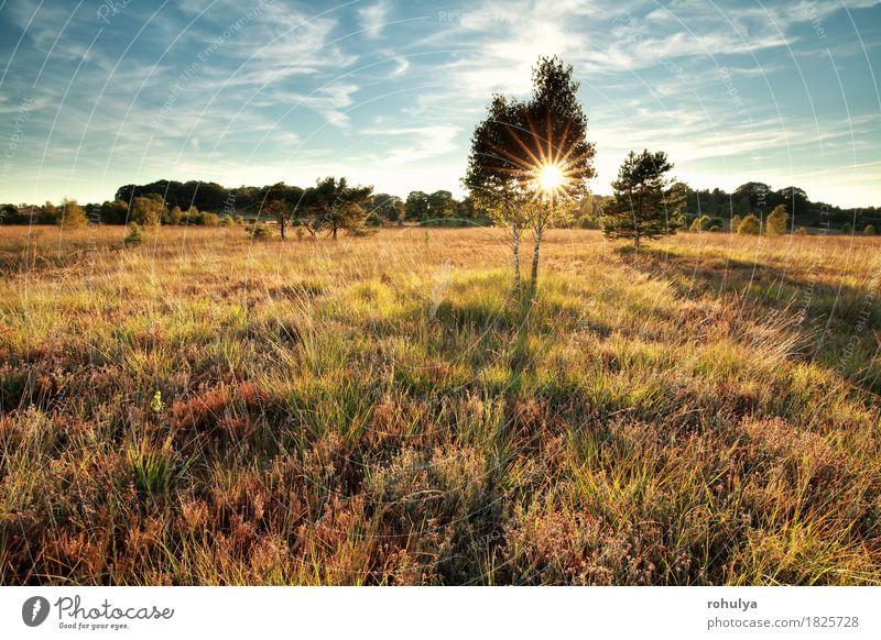 Sonnenuntergang Sonnenstrahlen hinter dem Baum auf Sumpf Himmel Natur blau grün Landschaft Wiese Herbst Gras Deutschland wild Aussicht Jahreszeiten
